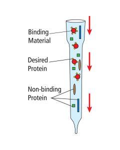 Edvotek Affinity Chromatography of Glucose Binding Proteins [80222]